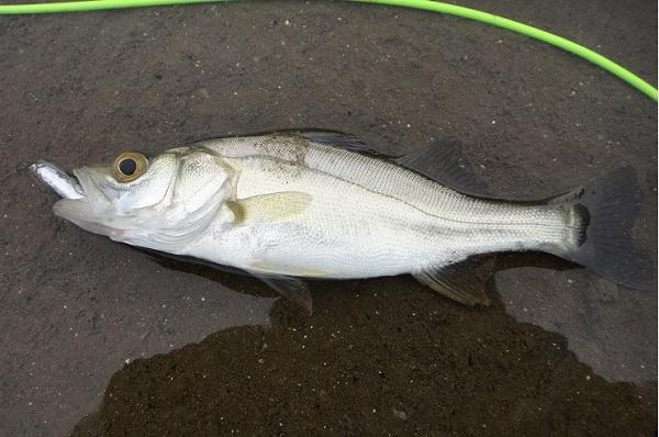 シーバス釣り ツーリング6