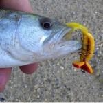 ガーグラーでバスを釣りに行こう!flyfishing for bass