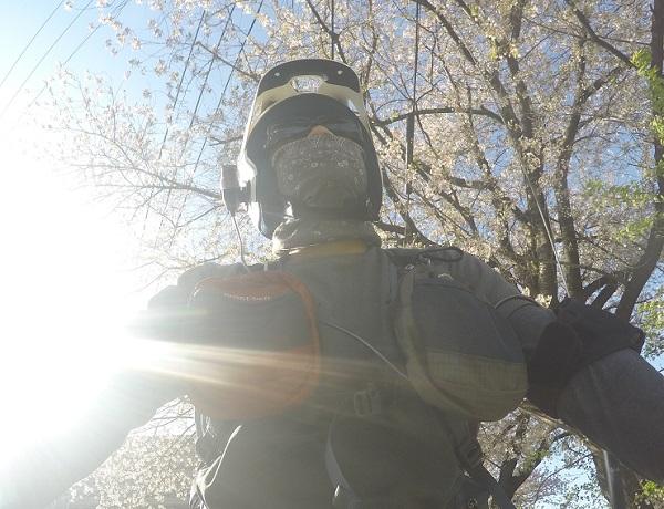 満開の桜を堪能@天白川