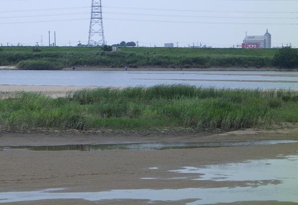 河川の中州