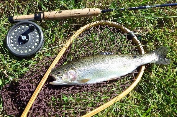 庄川で釣ったニジマス