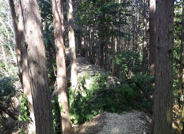 カズラ谷道 樹林帯