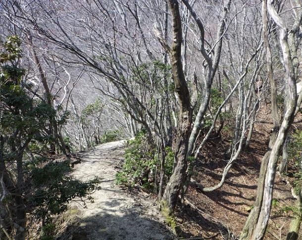 歩きやすい尾根道 鎌ヶ岳