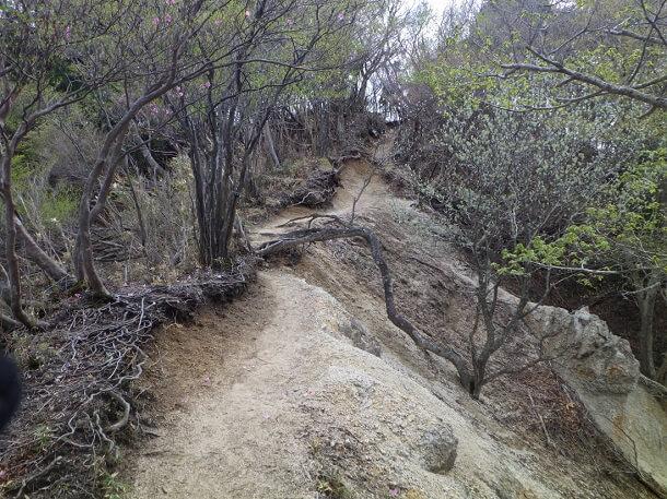 雑木に囲まれた尾根道