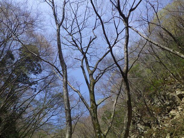 鎌ヶ岳 長石谷から見上げた青空