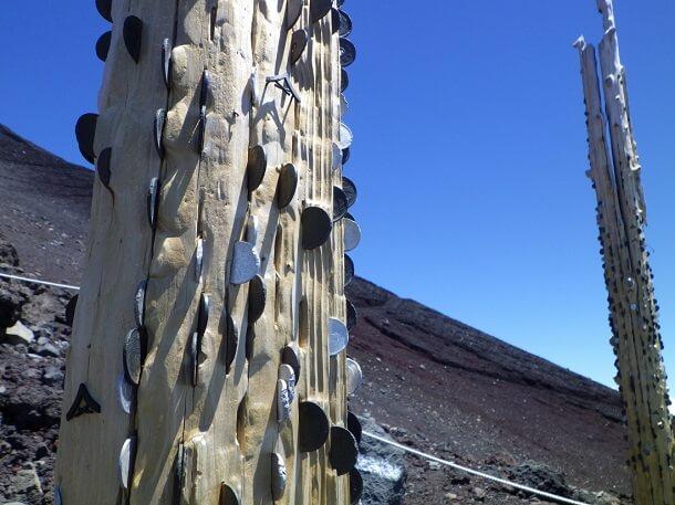 富士宮ルート コインの木