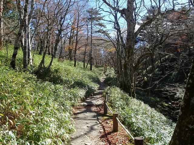 大台ヶ原登山口から日出ヶ岳への登山道