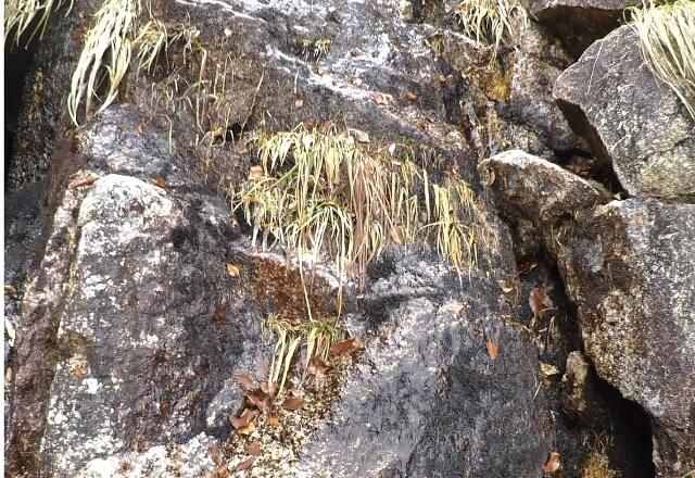 第三ルンゼ 岩壁