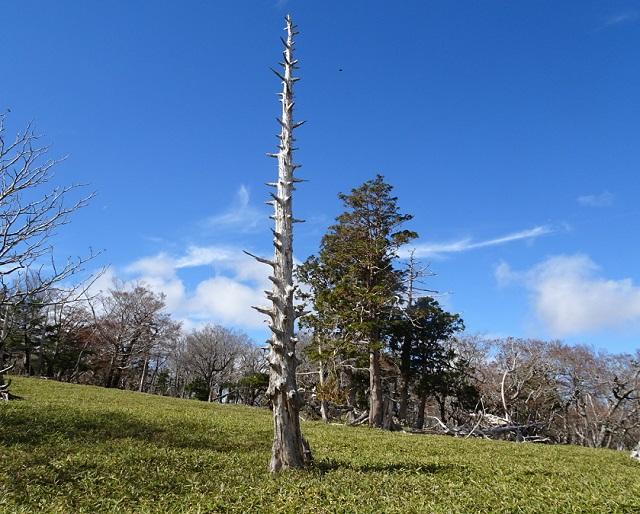 大台ヶ原 正木ヶ原の枯れ立木