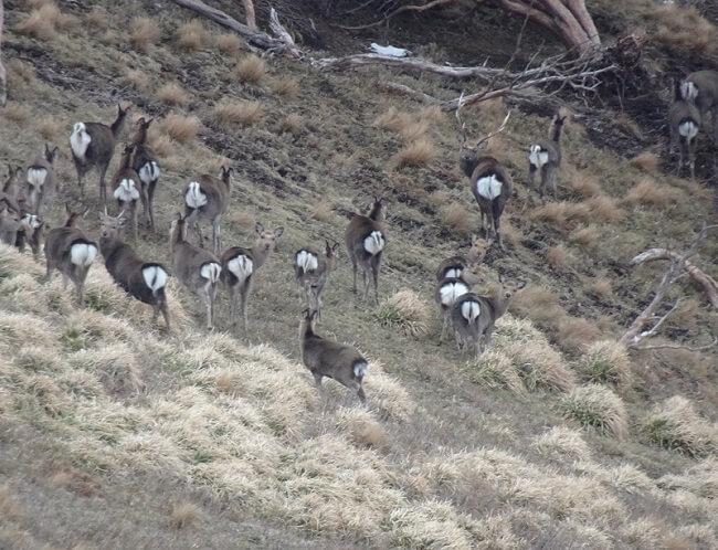 竜ヶ岳で鹿の群れと遭遇