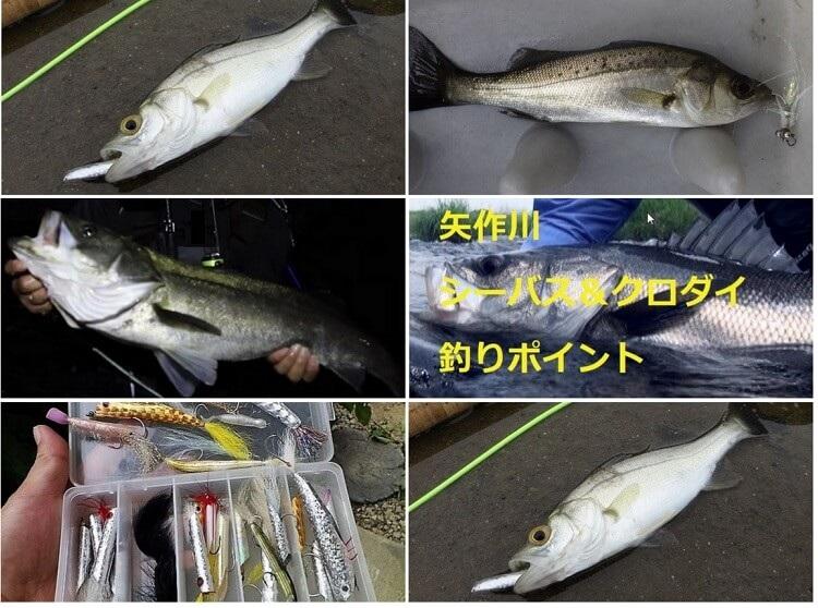 シーバス釣りに関する記事の一覧