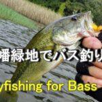 フライでバス釣り@小幡緑地 緑ヶ池 ウェーディング動画あり