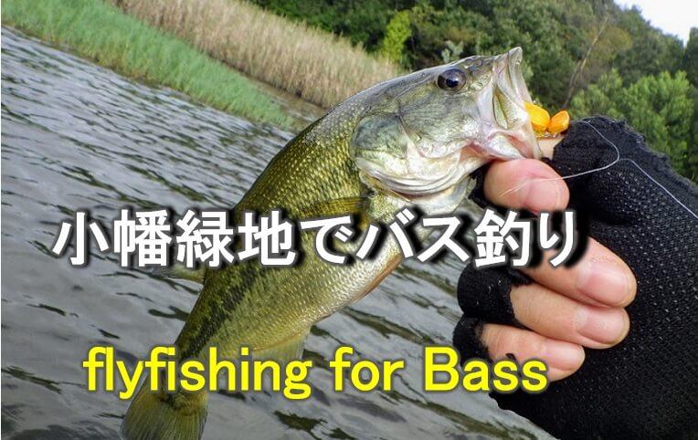 小幡緑地 緑ヶ池でバス釣り